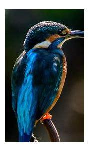 Download wallpaper 1920x1080 kingfisher, bird, beak ...