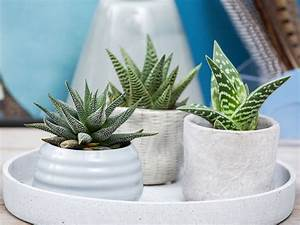 Ultimate Guide To Succulents  Types Of Succulents