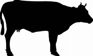 Cattle Beef Cow  U00b7 Free Vector Graphic On Pixabay