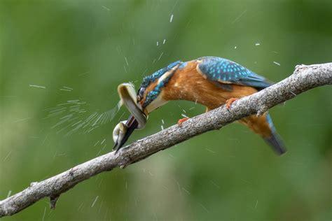 日本 野鳥 の 会