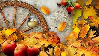 Fall Harvest Apple Butterfly Resolution Autumn Scenes