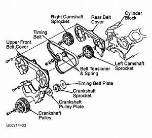 1995 Nissan Pickup Serpentine Belt Routing And Timing Belt