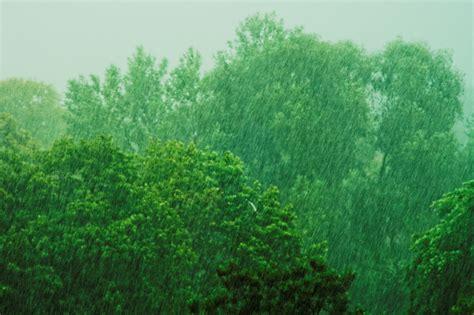 stock photo  green rain trees
