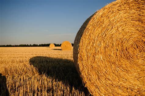 Plant, Hay, Bale, Field, Wheat, Summer, Food