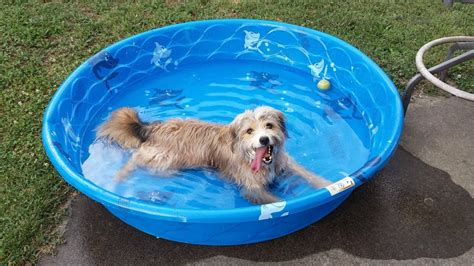 11 Dogs Who Simply Cannot Wait For Summer Opaque Plastic Sheeting Push Pin Rivets Trigger Sprayer Surgeons Hiring Estheticians Starbucks Water Bottle How To Bond Rubber Large Planter Square White Dinner Plates