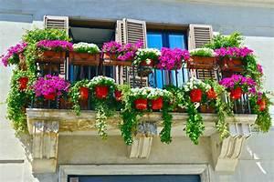 Pflanzen Für Balkon : s dbalkon bepflanzen diese pflanzen vertragen pralle sonne ~ Sanjose-hotels-ca.com Haus und Dekorationen