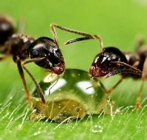 Ameisenplage Im Haus : ameisenplage im garten ameisenplage im garten ameise auf grashalm ameisen im ameisenplage im ~ Orissabook.com Haus und Dekorationen
