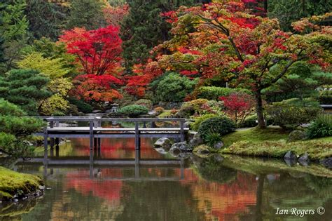 japanese garden at seattle arboretum seattle a
