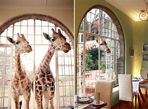 dreams  hd giraffe manor