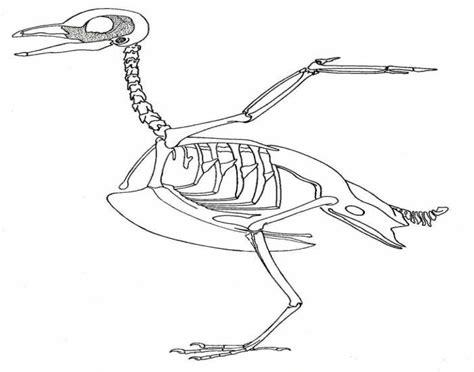 bird skeleton quiz purposegames