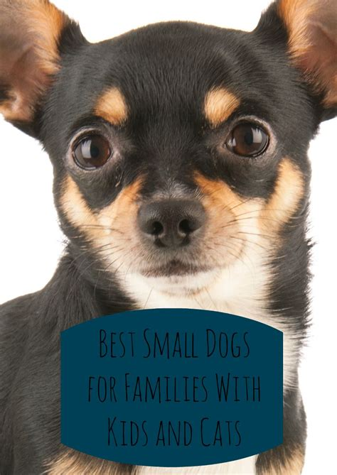 small dogs  families  kids cats dogvills