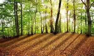 Foret à Bois : le bois de nos for ts ets michel ~ Nature-et-papiers.com Idées de Décoration