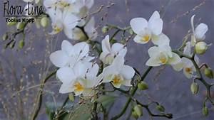 Orchideen Im Glas : orchidee im glas weiss ausgeliefert in m nsingen bei bern ~ A.2002-acura-tl-radio.info Haus und Dekorationen