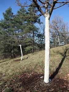 Comment Creuser Un Tronc D Arbre : comment traiter un tronc d 39 arbre la r ponse est sur ~ Melissatoandfro.com Idées de Décoration