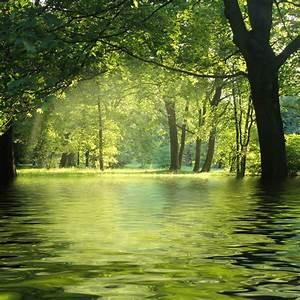 Fototapete Wald Natur Nass Wasser Baum PIXERSde