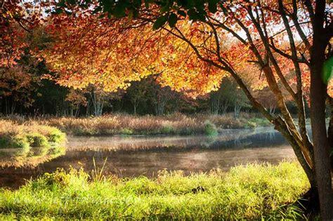 foliage drives   england  england fall