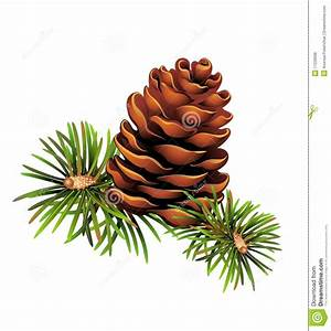 Christmas Pine Clipart - Clipart Suggest