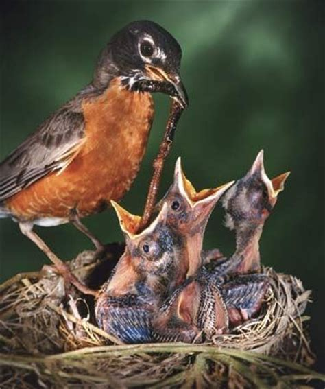 what do birds eat when there are no worms quora