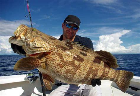 fishing grouper gulf coast saltwater easy part deep spinning reels florida fish sportsmanslifestyle