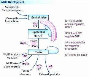 15 Best Chapter 27  The Male Reproductive System Images On