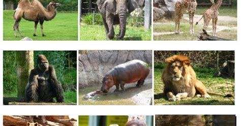 zoo animals vocabulary english
