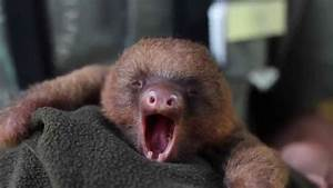 "These Baby Animals Yawning Will Make You Say ""Awww!"" Too ..."