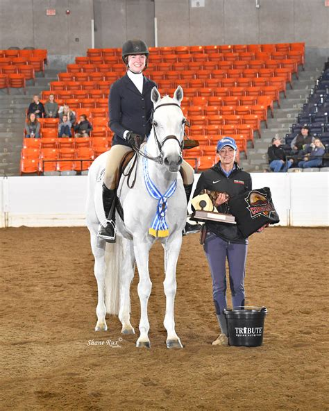 congress around champions champion maeve mcloughlin illusions congratulations horse quarter american aqha