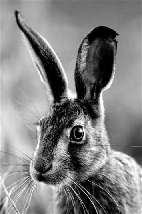 Tierbilder Schwarz Weiß by Die 25 Besten Ideen Zu Schwarz Wei 223 Fotos Auf
