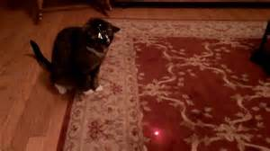 cats attempt  catch laser beam   hour  owner