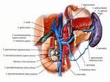 Гипертония лечение неумывакин отзывы