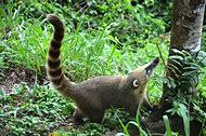 Brazil Wildlife Animals