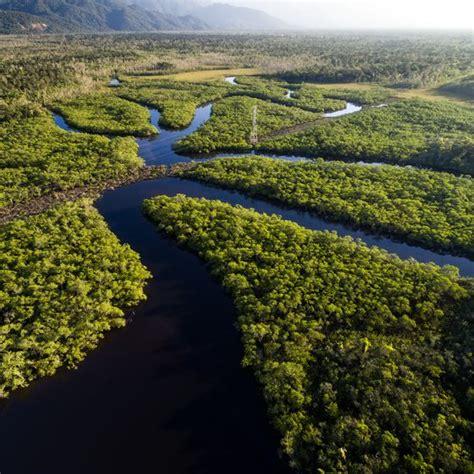 activities   amazon rainforest usa today