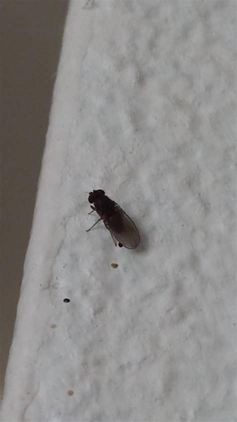 d insectes dans mon appart notre planete info