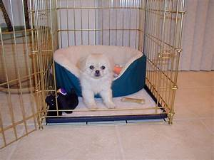 puppy training when working full time pet salute With small dog training crate