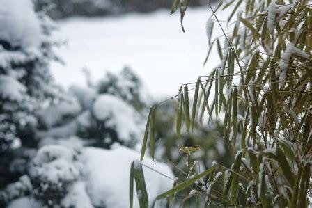 Garten Pflanzen Januar by Garten Und Pflanzen Im Januar Garten Pflanzen