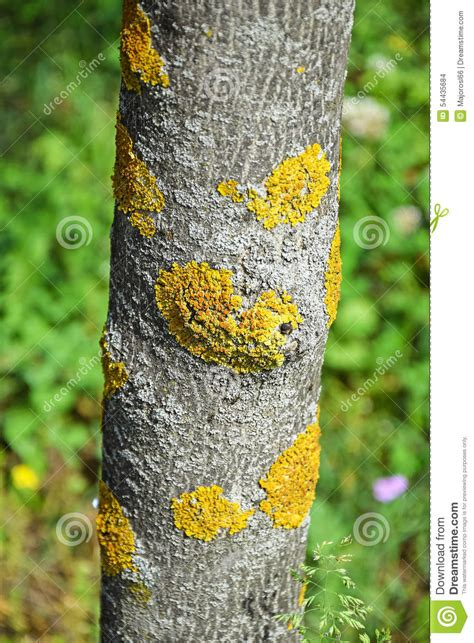 chignon sur le tronc d arbre photo stock image 54435684