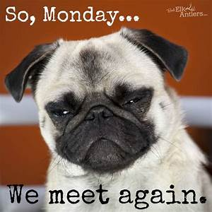 We meet again... #Monday #dog #funny | Funny Animals ...