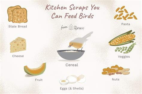What Do Baby Birds Eat for Food