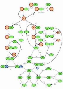 A Computational Model On The Modulation Of Mitogen