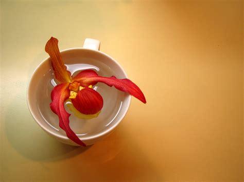 entretien orchid 233 e apprendre 224 bien s occuper d une