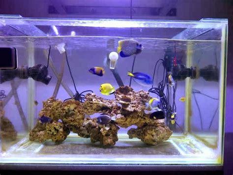 tips jitu menata aquarium air laut mini aquarium hias