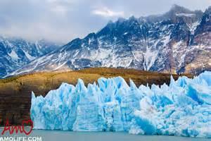 Patagonia Chile Wildlife