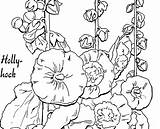 Coloring Hollyhocks Pages Adult Hollyhock Fairy Drawings Template Graphics 2484 2kb 1086 sketch template