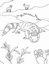 Desert Gila Animals Coloring Monster Drawing Pages Sonoran Printable Drawings Books Easy Oasis Science Caroline Sketch Activities Getdrawings Arnold Hungry sketch template