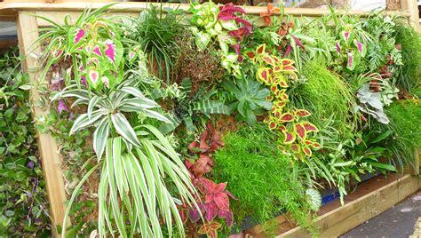 plante mur vegetal exterieur atlub