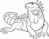 Iguana Coloring Pages Animal Clip Smiles Vector Drawings Cartoon Outline Activity Sheets Illustration Animals Printable Illustrations Istockphoto Google sketch template