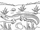 Coloring Pages Alligator Printable Baby Colouring Picnic Animal Cool2bkids Printables Table Reptiles Getcolorings sketch template