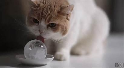 Cat Animated Cats Kitten Kittens Kitty