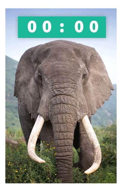 Wildlife Domestic Trade Zealand End Petition Foundation