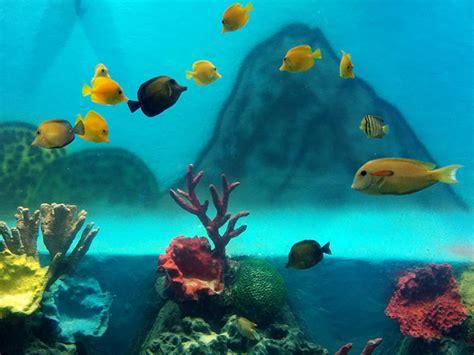 taraporewala aquarium mumbai one day taraporewala aquarium mumbai one day picnic spots destinations in india